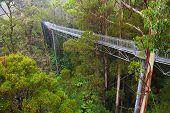 Famous Rainforest In Rain