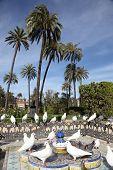 Pigeons In a Park. Seville, Spain