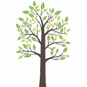 Stylized lone tree with fresh young leaves in spring. This image is a vector illustration.