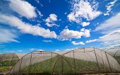 Greenhouse with chard vegetables under dramatic blue sky in Mediterranean Spain