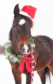 Cute dark bay Arabian horse with a Santa hat, wearing a Christmas wreath