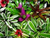 pic of bromeliad  - Entangled bromeliads with different colors forming a texture - JPG