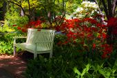 foto of azalea  - Beautiful manicured shade garden with a white park bench surrounded by blooming rhododendron and azalea shrubs and trees and ferns - JPG