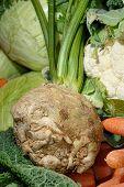 Celeriac, a root vegetable
