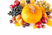 Autumn Fruits On A Light Background