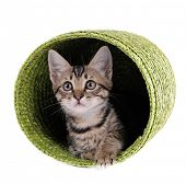 stock photo of puss  - Little kitten in wicker basket isolated on white - JPG