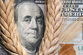 Wheat on bank note