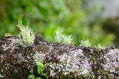 moss in wood
