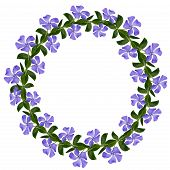 Periwinkle Flowers Line In A Circle