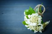 Viburnum Flowers Fruit