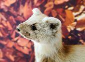 foto of stuffed animals  - Stuffed wild animal in museum of nature Belgium - JPG