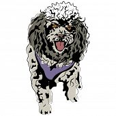 An image of a poodle.