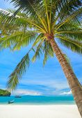 Beach And Coconut Palm, Angthong National Park Island,thailand