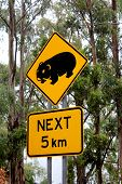 picture of wombat  - Wombat Road sign - JPG