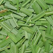 stock photo of citronella  - Citronella Grass leaves background - JPG