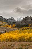 Autumn foliage at peack in north america