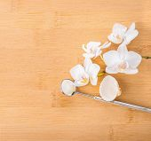 Dentistry Concept  With White Orchid, Shell And Dental Tools