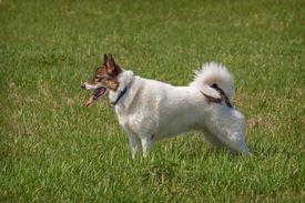 image of laika  - Portrait of a cute Siberian husky  - JPG