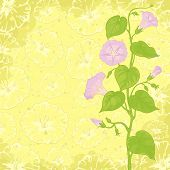image of ipomoea  - Yellow background with Ipomoea flowers and leaves - JPG