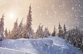 Winter forest covered with snow. Christmas landscape. Fabulous trees in snowdrifts