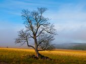 Solitary tree in autumn time