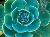 Cactus Macro With Vivid Texture And Color