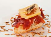picture of cricket insect  - Serrano ham on toast with cheese and cricket - JPG