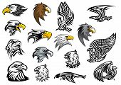 picture of eagles  - Cartoon eagle - JPG