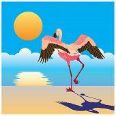 Flamingo On The Shore