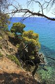 Picturesque coast of the Aegean Sea. Summer landscape.