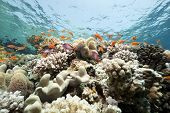 stock photo of coral reefs  - Coral and fish taken in the Red Sea - JPG