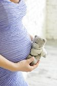 Closeup on tummy of pregnant woman, wearing purple dress, holding in hands  of bear