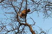 picture of minion  - ginger little kitten sunbath on top of tree - JPG
