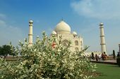 Taj Mahal behind green bush