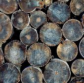 picture of piles  - Pile of wood logs ready for winter close - JPG