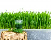 foto of grass  - Shot glass of wheat grass with fresh cut wheat grass and wheat grains - JPG