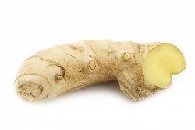 image of zingiber  - Ginger  - JPG