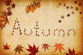 Autumn Written By Leaves