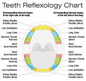 image of reflexology  - Teeth reflexology chart  - JPG