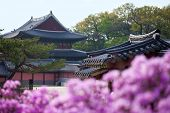 stock photo of seoul south korea  - Rhododendron blooming in Changdeokgung Palace in Seoul Korea with traditional houses on the background  - JPG