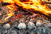 Постер, плакат: Potatoes In The Fire