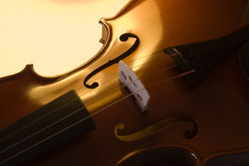 pic of musical instrument string  - musical instruments - JPG
