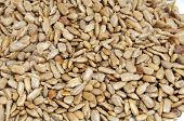 closeup of a pile of salted sunflower seeds