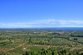aerial view of olive groves in Costa Daurada, Spain