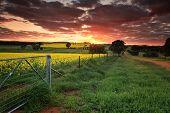 Sunrise Farmlands Australia poster