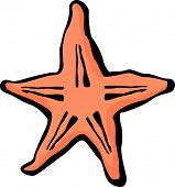 starfish or sea star