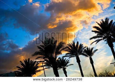 beautiful sunset sky with palm