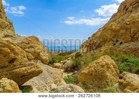 Landscape Of Nahal David Valley