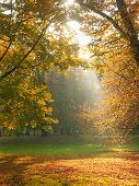 Sun rays breaking through the trees in fall time 1019_29