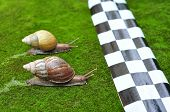 picture of escargot  - Snail Race - JPG